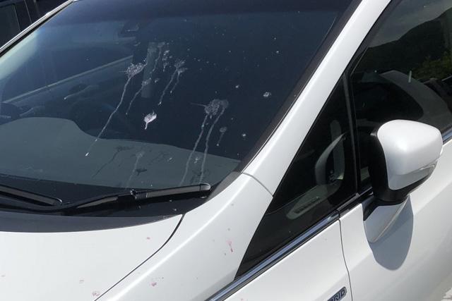 車の鳥のふん対策! 取り方と予防法を両方解説します