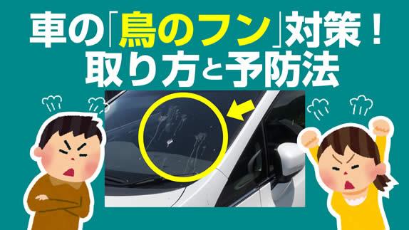 【掃除】車の「鳥のフン」対策!取り方と予防法【よく落とされる】